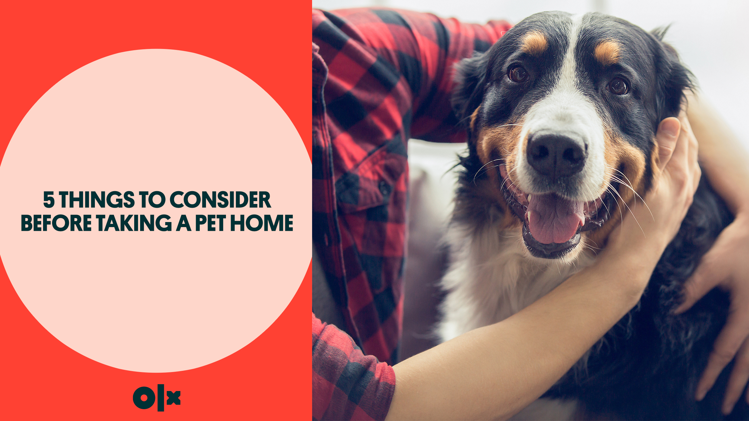 5 Things to Consider Before Taking a Pet Home