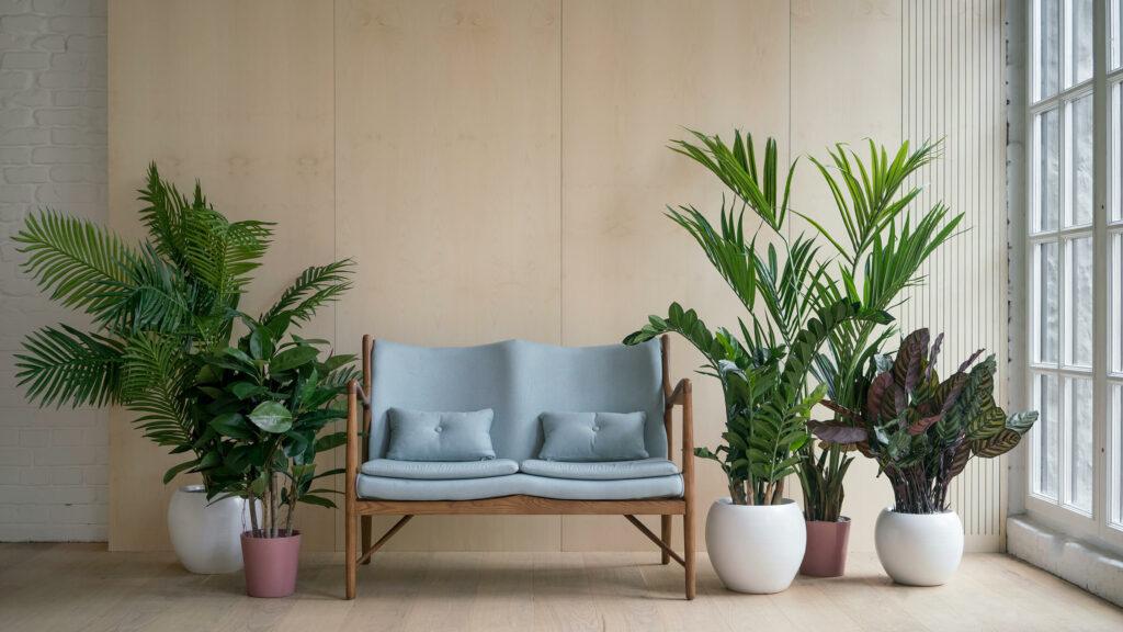 Lounge Plantation