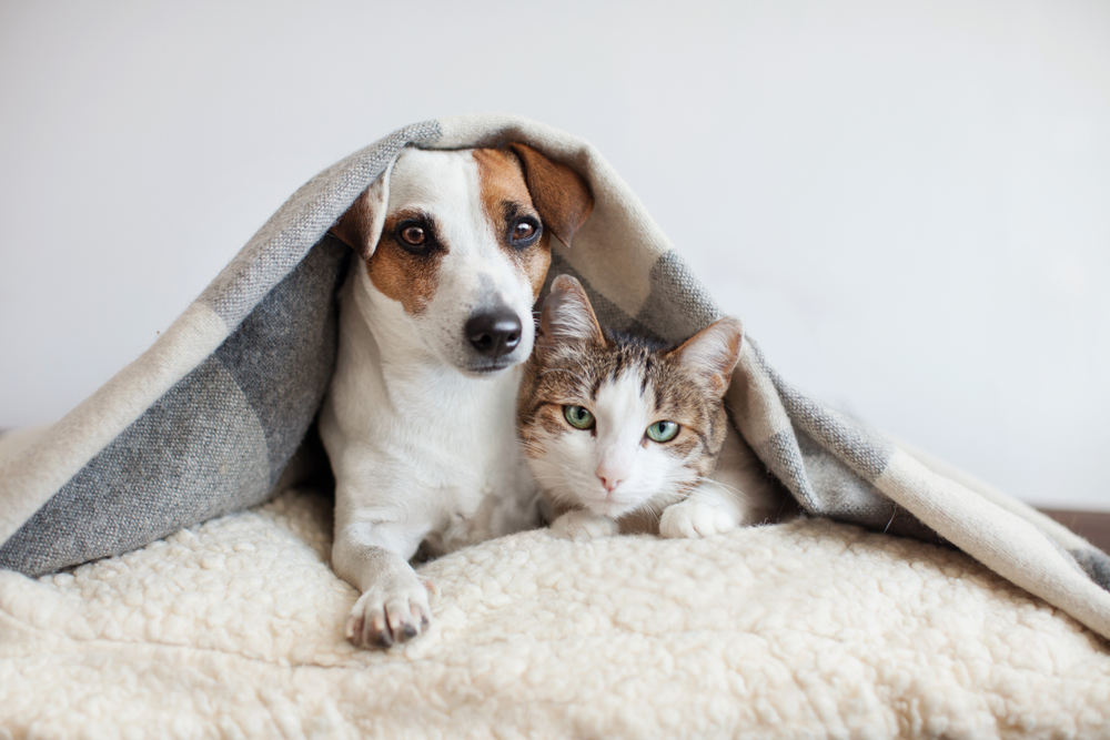 cat-and-dog-together-in-a-blanket