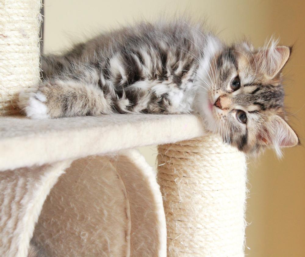 kitten-lying-on-the-scratch-post