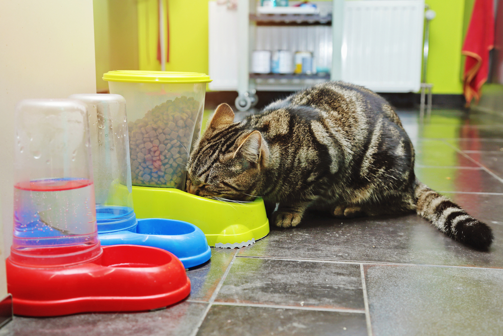 little-cat-eating-from-the-food-dispenser