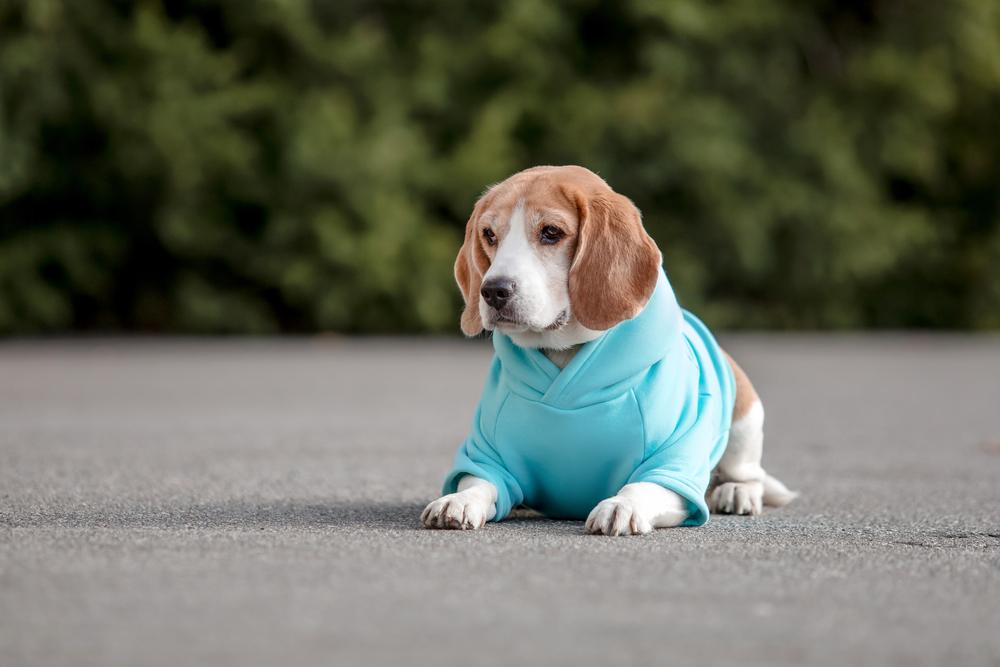 pet-dog-in-a-blue-onesie
