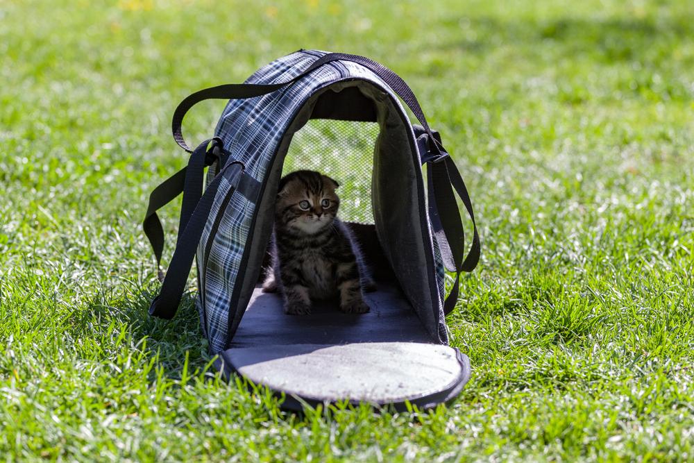 cat-inside-an-open-pet-carrier-on-grass