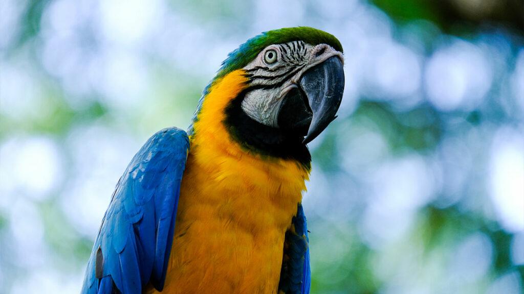 Macaw-image