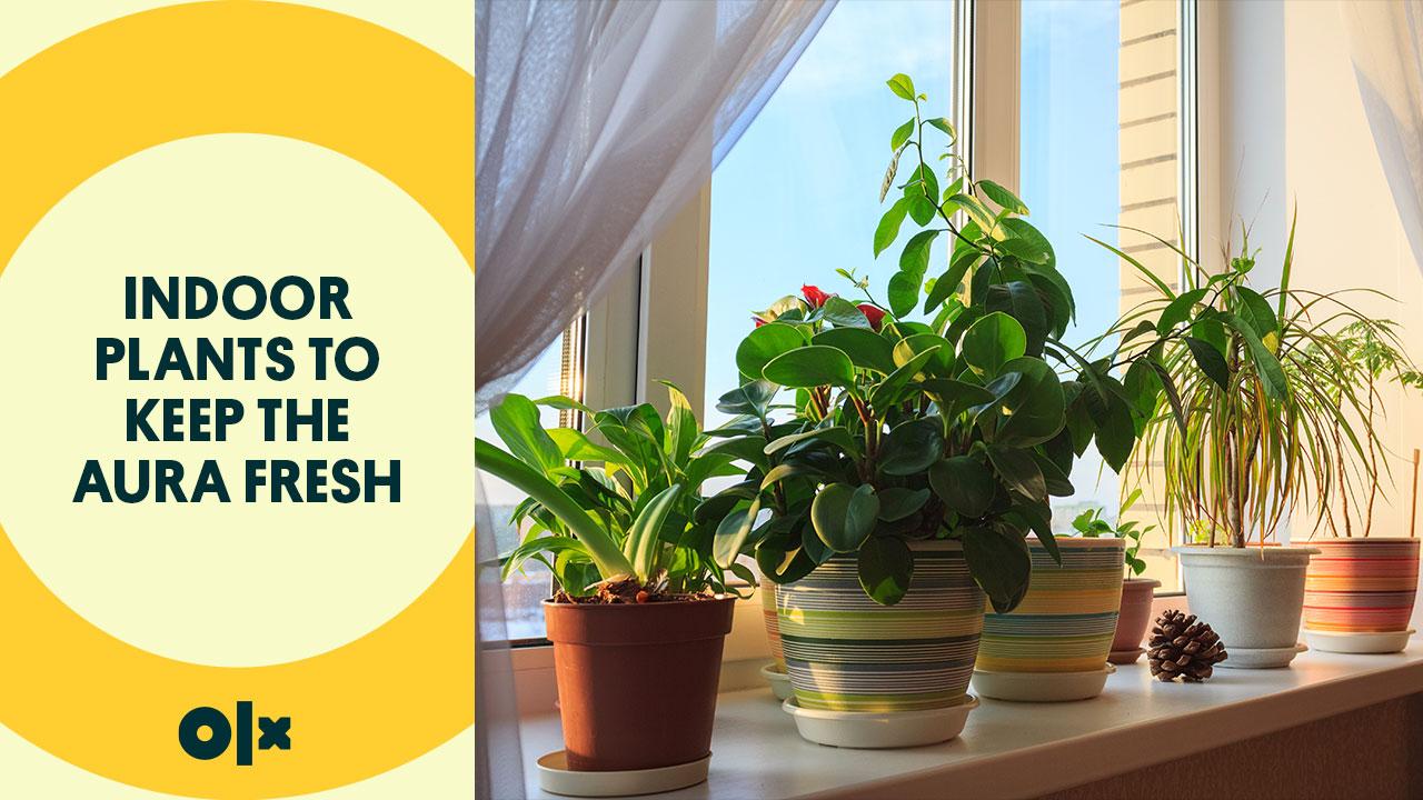 Indoor Plants To Keep The Aura Fresh