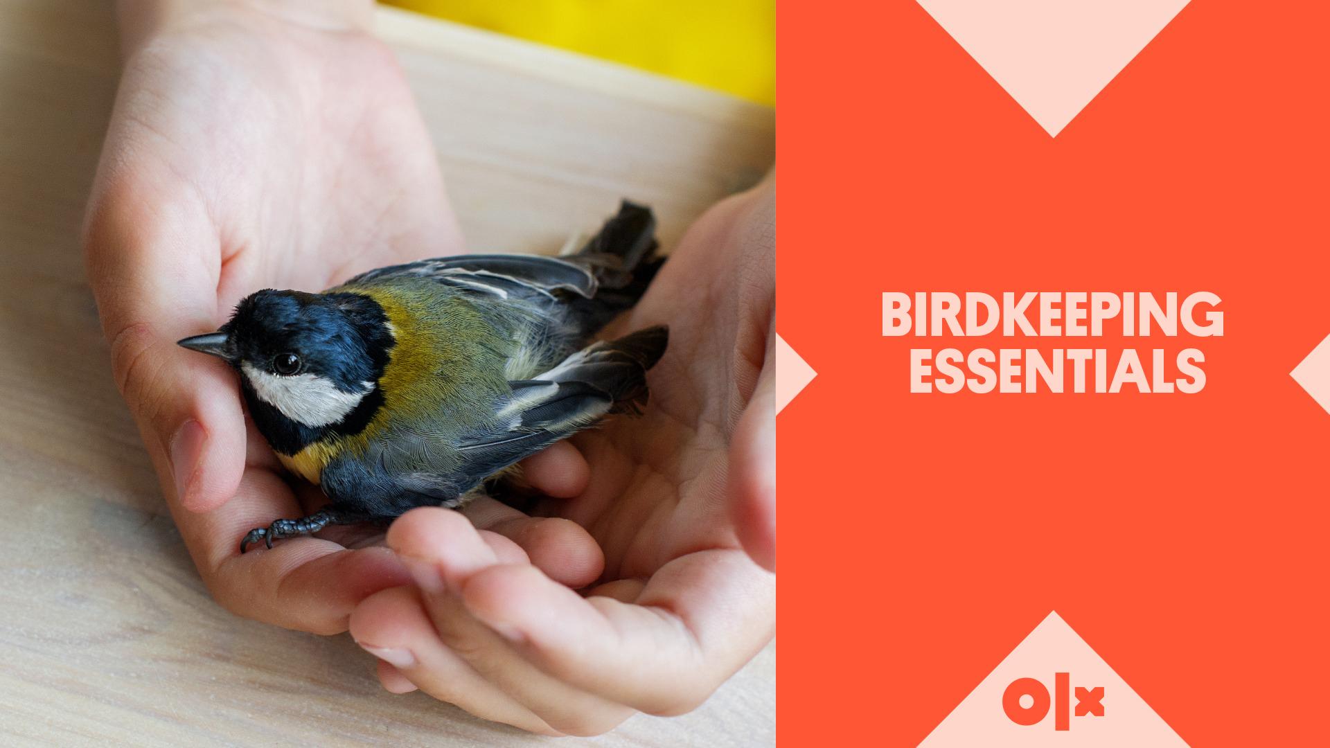 Birdkeeping Essentials